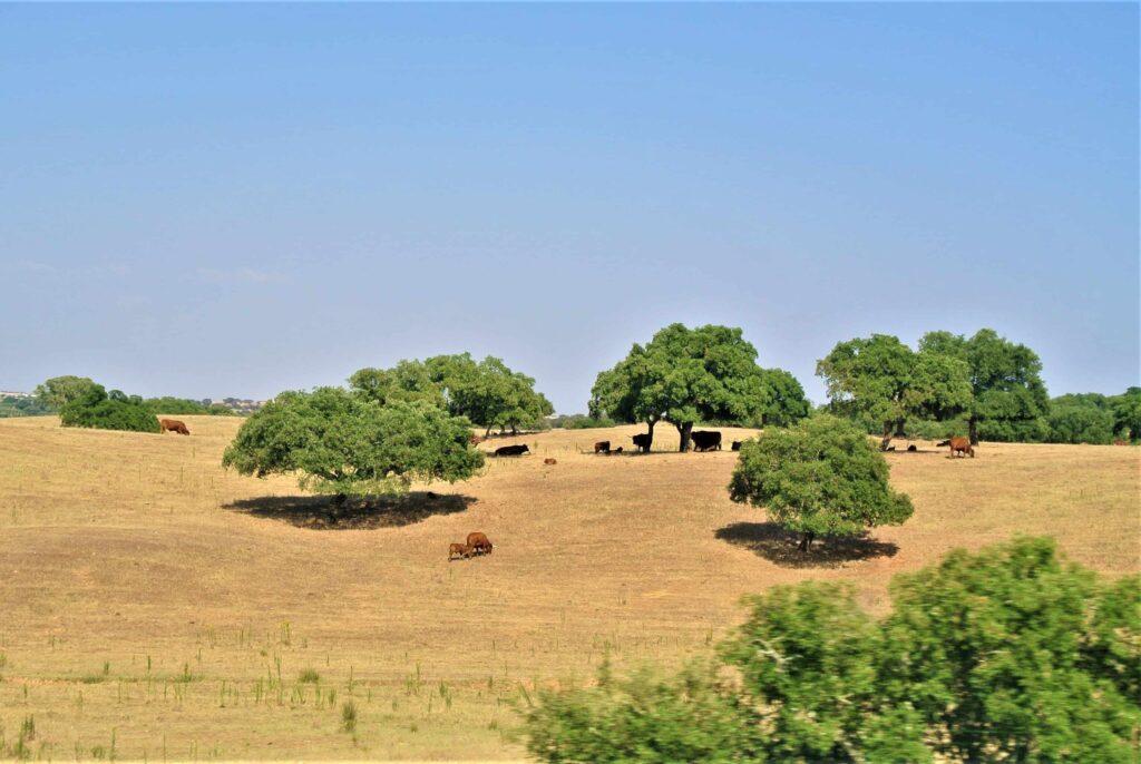牛が数頭放牧されている