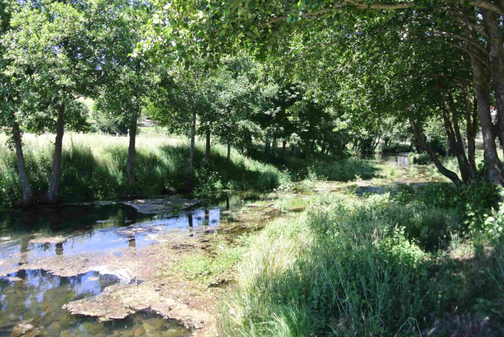 緑の木々に囲まれる川辺