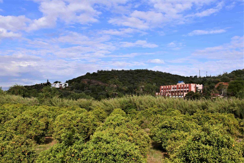 草木の奥に建つホテルHotel Colina dos Mourosの建物