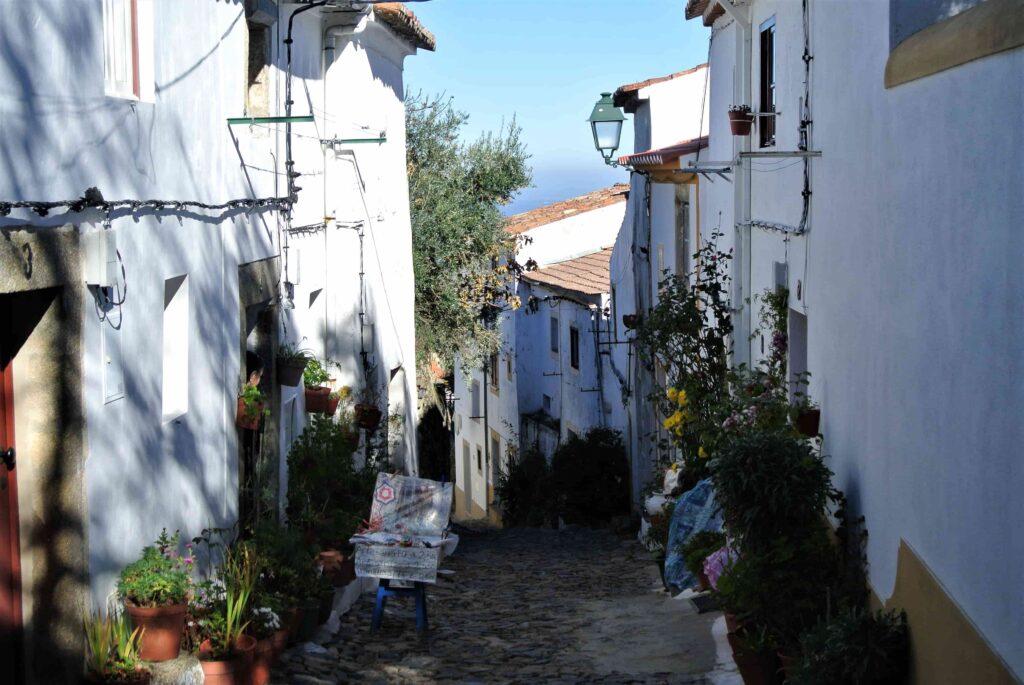 植栽のある商店や家に囲まれた路地